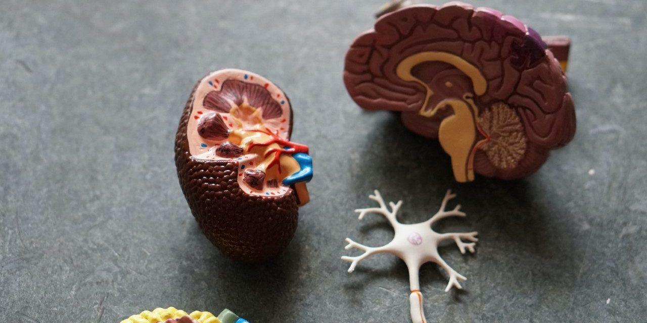 Există o legătură între obezitate și bolile renale și ale vezicii biliare?
