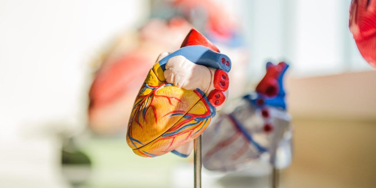 Obezitatea severă slăbește mușchiul inimii la pacienții cu insuficiență cardiacă de tip HFpEF